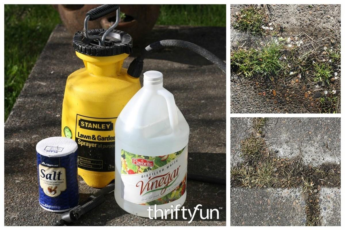 Salt and Vinegar Weed Killer Recipe   ThriftyFun