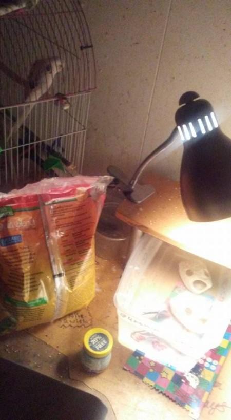 Polly (Parakeet) and Nemo (Betta)