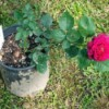 June Is Plant Rooting Month
