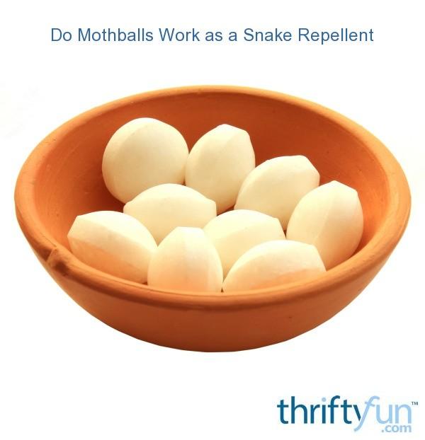 Do Mothballs Work As A Snake Repellent Thriftyfun