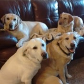 My Five Labs