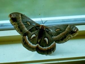 Wildlife: Butterfly