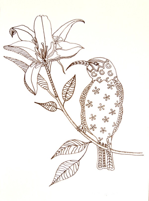 Hummingbird on Flower Adult Coloring Page | ThriftyFun