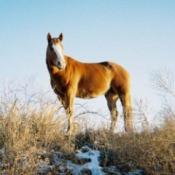 Justin Time - Quarter Horse Gelding