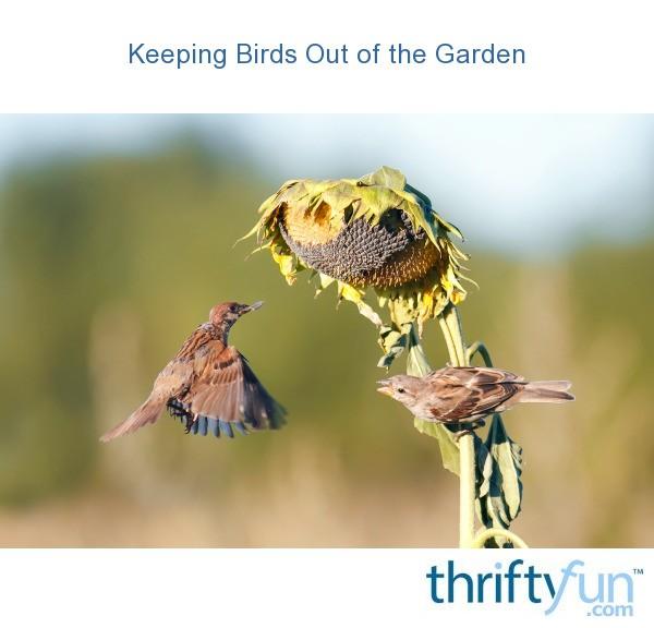 Keep Birds Out Of The Garden Thriftyfun