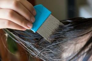 Dark hair having a lice comb run through it