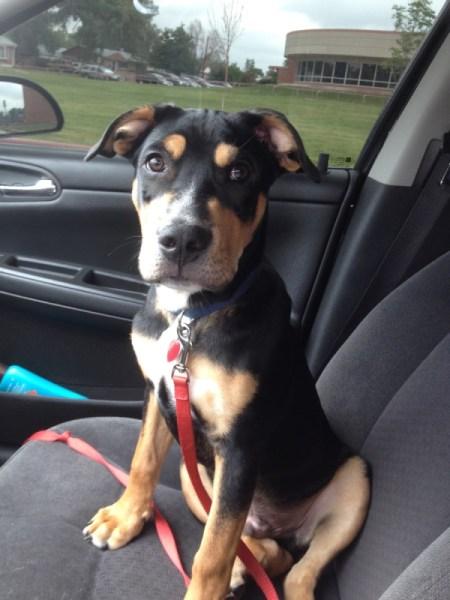 black and tan dog in car