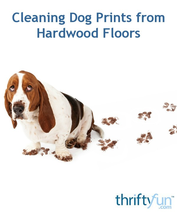 Dogs And Hardwood Floors: Cleaning Dog Prints From Hardwood Floors