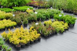 Garden Center with plants clearly labelled