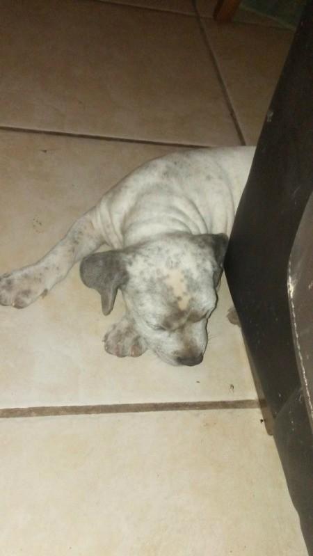white puppy with dark spots