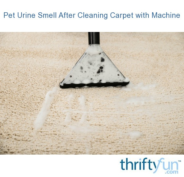 Dog Smell After Carpet Cleaning Nrtradiant