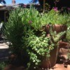 Plant succulents in strawberry pots