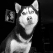 black and white photo of Jager