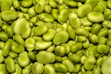Close up of green lima beans