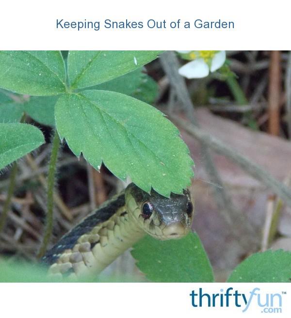 Keeping Snakes Out of a Garden | ThriftyFun