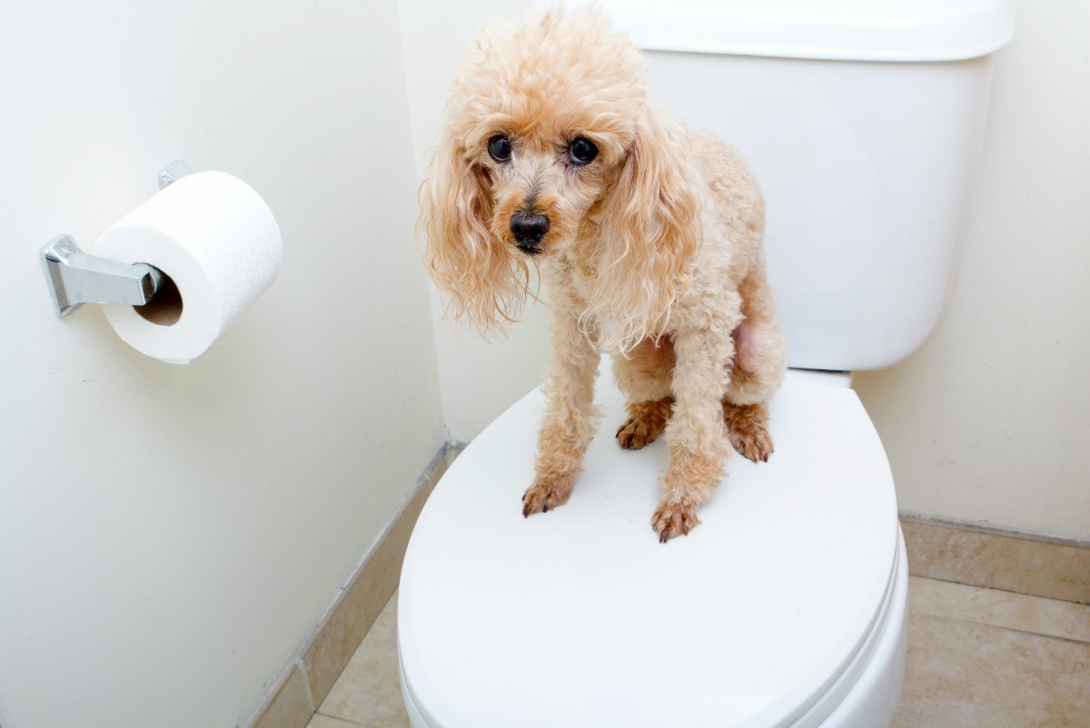 New Dog Not Going to The Bathroom? | ThriftyFun