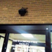 bird nesting on light about hospital entrance
