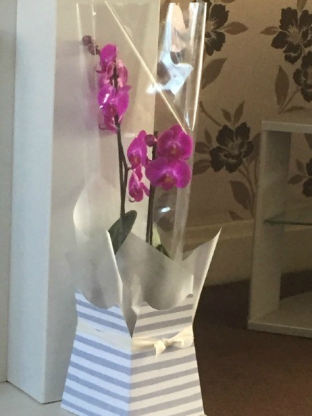 Purple flowering orchid