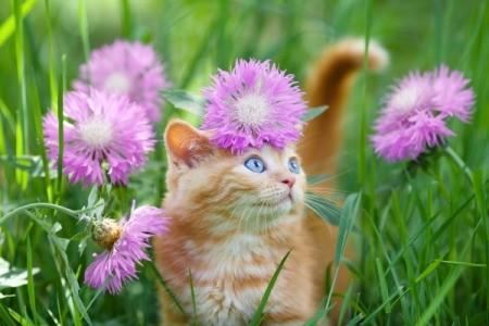 Orange tabby kitten in grass and flowers