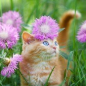 Orange tabby kitten in grass and flowers