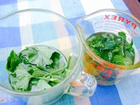Homemade Mint and Geranium Sprays