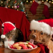 Dog and cat in santa hats.  Dog is licking the plate of cookies left out for Santa and the cat is drinking the milk.