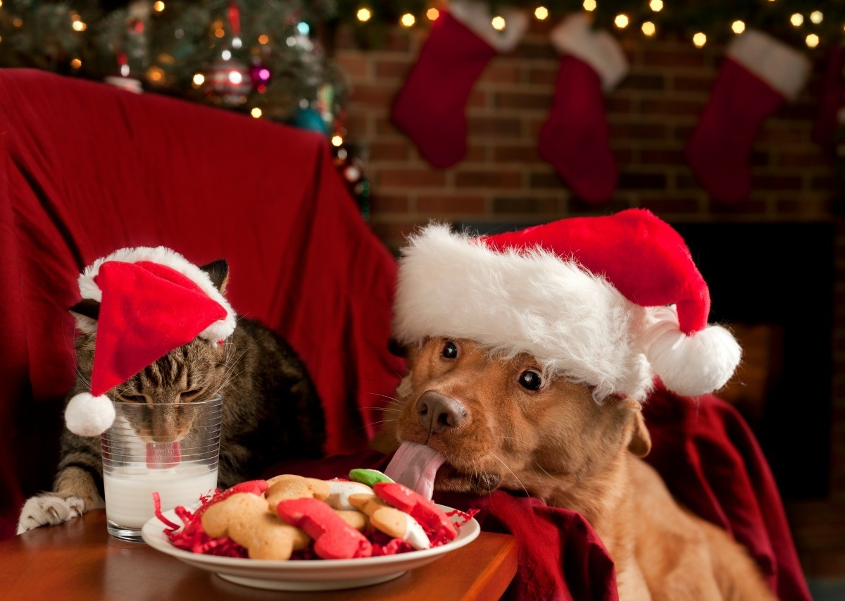 Christmas Card Photo Ideas With Pets My Frugal Christmas