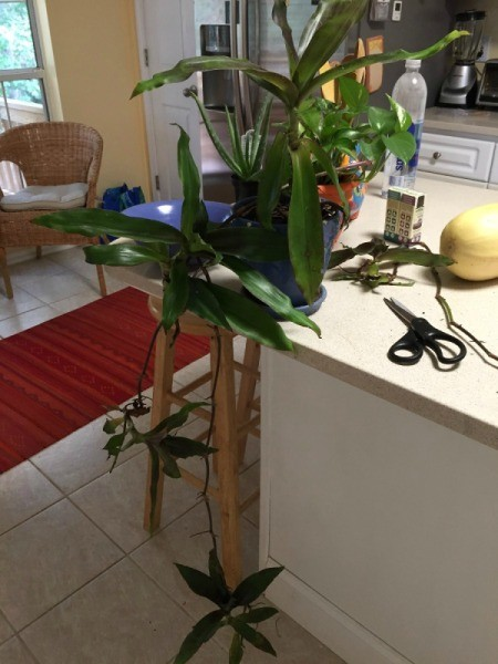 What Is This House Plant?