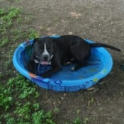 black and white dog in wading pool
