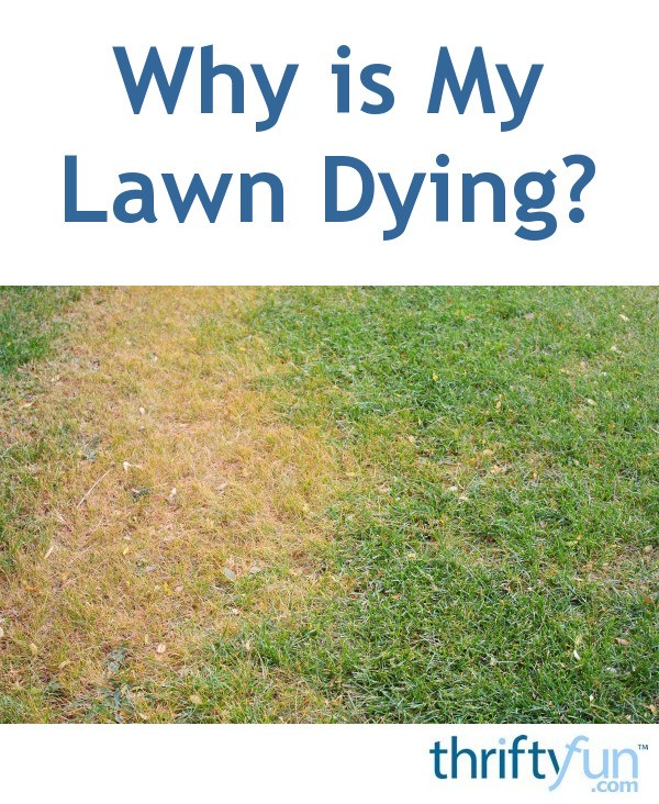 Why Is My Lawn Dying?