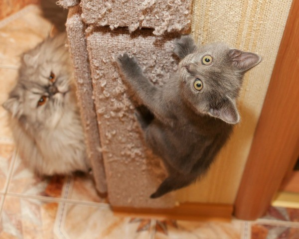 home remedies to keep cats out of your garden