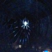 nighttime photo of spider in its web