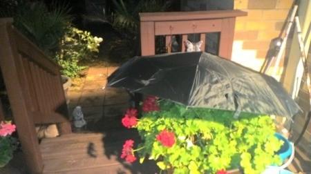 umbrella shading geraniums