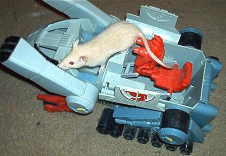 Matthias a white rat on a toy tank