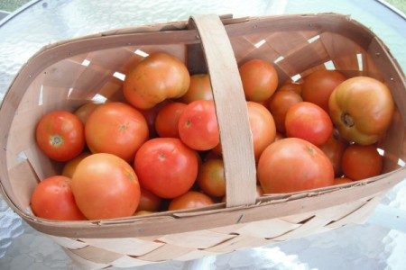 Save Egg Shells for Planting Tomatoes