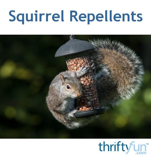 Squirrel Repellents Thriftyfun