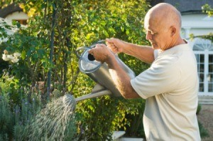 Man watering plants with a watering can