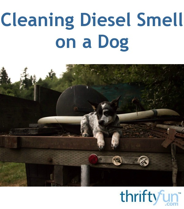 Dog Smell Clean Up: Cleaning Diesel Smell On A Dog