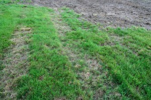 Grass with large dead patches