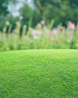 grass lawn with blurred flowers in background