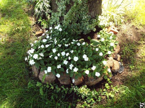 Photograph Your Garden