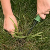 Hands using a weeding tool to remove crab grass from lawn