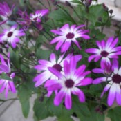 pretty purple and white flowers
