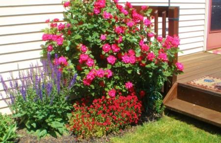 Photos of My Garden
