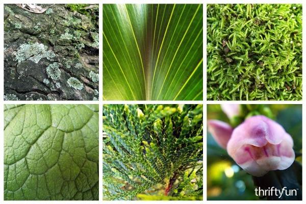 montage of close up garden photos