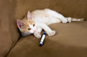 Kitten laying on couch with a pen
