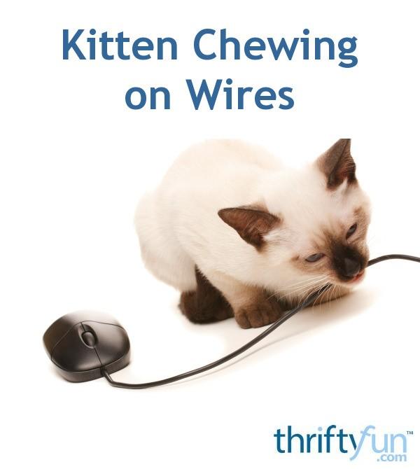 Kitten Chewing on Wires | ThriftyFun