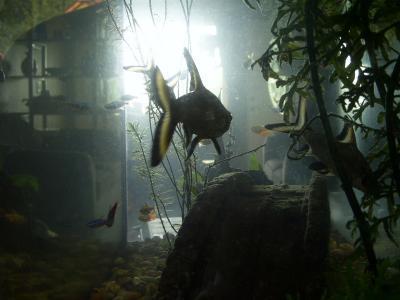 RE: Use Aquarium Water For Plants