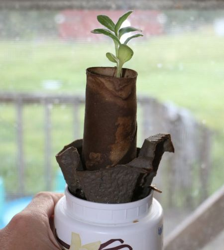 Recycle Cardboard for Starting Seeds