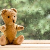 Old stuffed bear sitting in front of a rainy window
